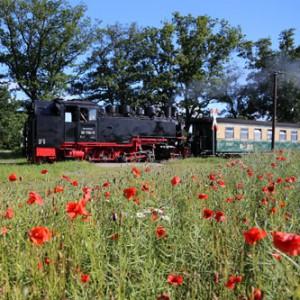 Anfahrt zur Outdoor Minigolfanlage im Ostseebad Göhren mit der Kleinbahn Rasender Roland